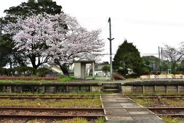 駅・桜情景2016(10)