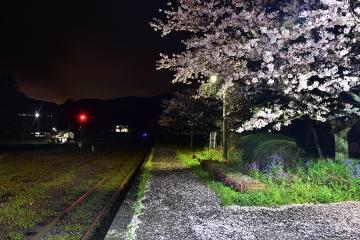駅・桜情景2016(11)