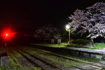 駅・桜情景2016(13)