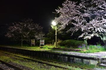 駅・桜情景2016(14)