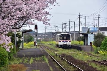 駅・桜情景2016(15)