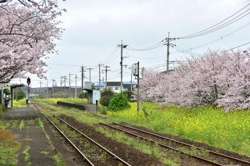 駅・桜情景2016(16)