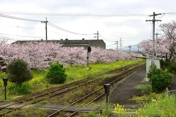 駅・桜情景2016(17)