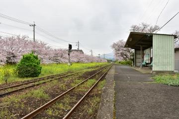 駅・桜情景2016(18)