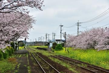 駅・桜情景2016(20)