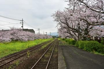 駅・桜情景2016(21)
