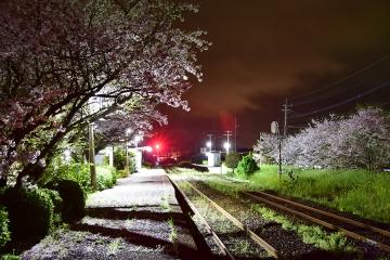 駅・桜情景2016(22)