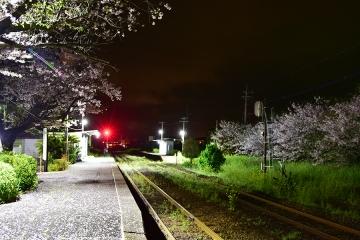 駅・桜情景2016(23)