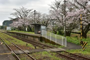 駅・桜情景2016(24)