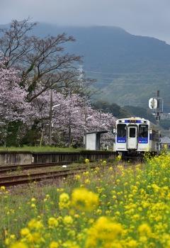 駅・桜情景2016(25)