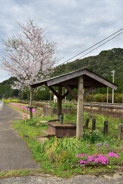 駅・桜情景2016(27)