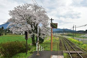 駅・桜情景2016(29)