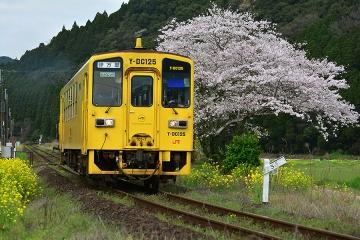 駅・桜情景2016(31)