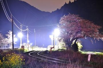 駅・桜情景2016(37)
