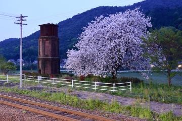 桜情景2016(41)