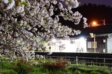 桜情景2016(42)