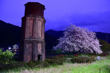 桜情景2016(45)