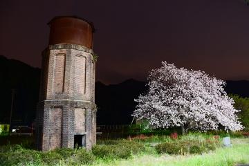 桜情景2016(47)