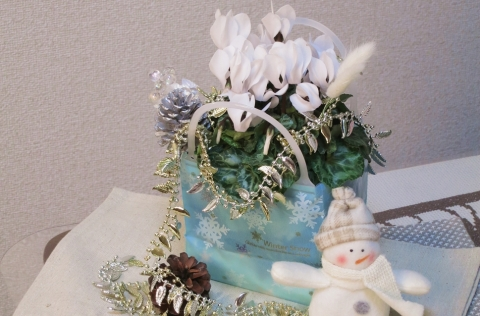 【おうち花マスター講座】花の苗もクリスマス風に♪