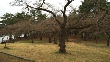 野木和ノル (12)_600