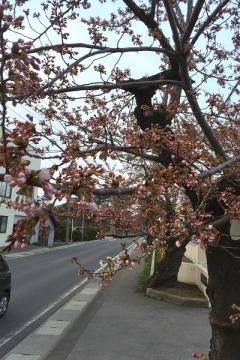 芦野公園桜4-20 (3)_600