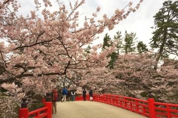 弘前公園4-21 (3)_600