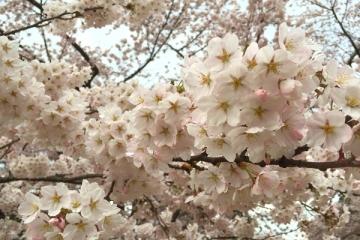 弘前公園4-21 (4)_600