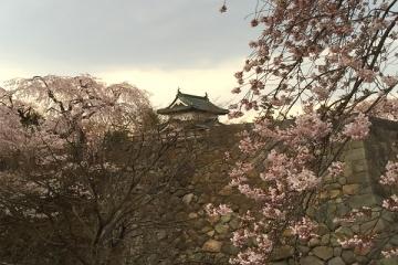 弘前公園4-21 (5)_600