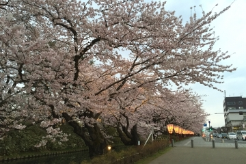 弘前公園4-21 (10)_600