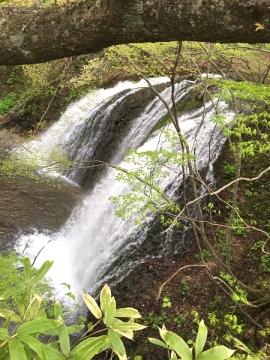 藤の滝2016-5 600 (5)