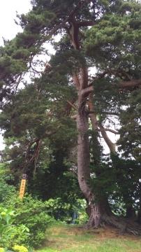 杉山屋敷 (9)_600