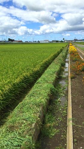 草刈り8-27 (3)_500