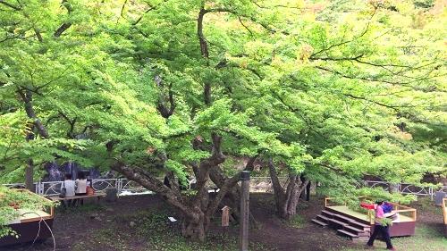中野もみじ山 (8)_500