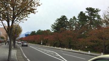 菊祭り (1)_500
