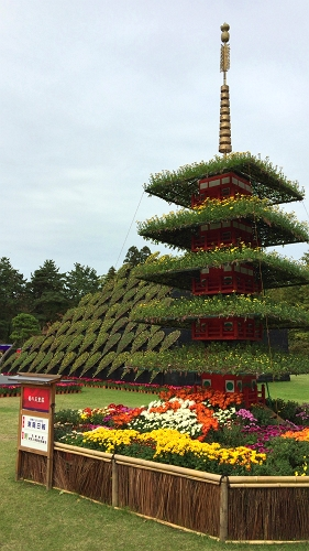 菊祭り (7)_500