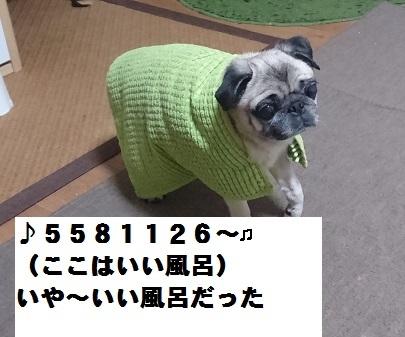 20161104b.jpg