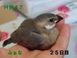 HN47幼名ふぉな
