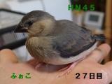 HN45幼名ふぉこ。。。