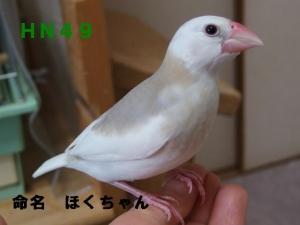 命名ほくちゃん