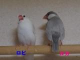 ぼそぼそペア~ロビ&ルカ
