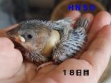 HN50ダーク娘~いと