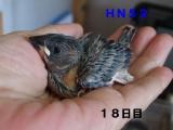 HN52眼がぱっちり~