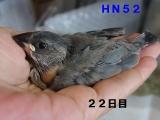 HN52きょろきょろ