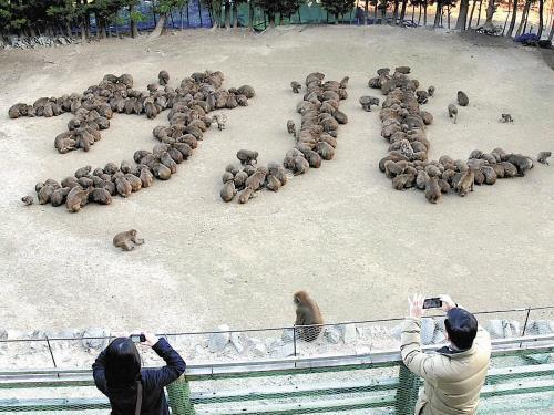猿でサルの猿文字(淡路島モンキーセンター)