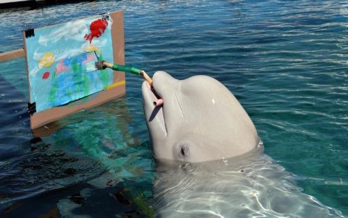 イルカの絵描き