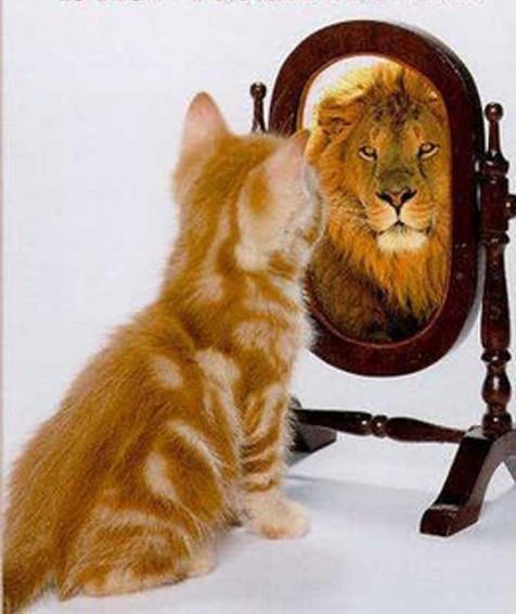 猫が鏡の前で:強そうなライオンに見える