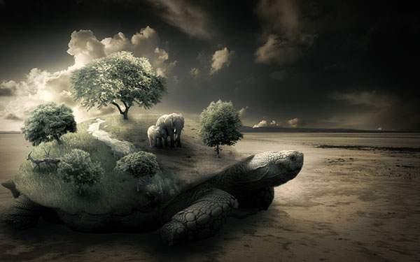 wallpaper-turtle-illustration-06.jpg