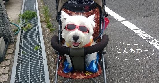 ベビーカー上のサングラス犬