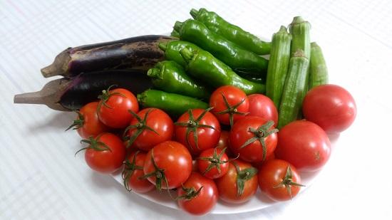 秋になっても夏野菜収穫
