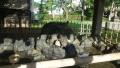 湯倉神社11